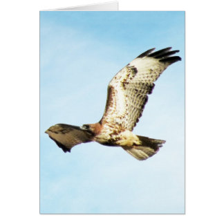 """Our Greatest Glory.  ."" Red-Tailed Hawk in Flight Card"