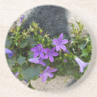 out of the wall flower coaster