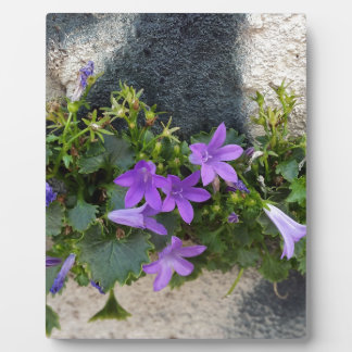 out of the wall flower plaque