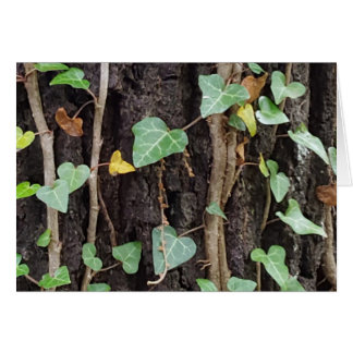 Outdoor Tree Bark With Green Ivy Card