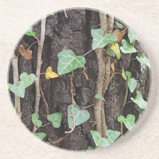 Outdoor Tree Bark With Green Ivy Drink Coasters