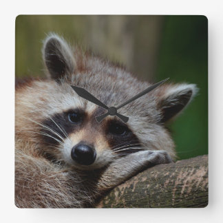 Outrageously Cute Baby Raccoon Clock