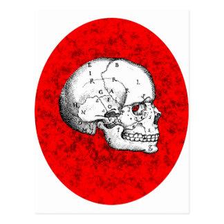 Oval Skull Postcard