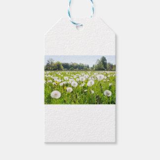 Overblown dandelions in green dutch meadow gift tags