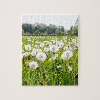 Overblown dandelions in green dutch meadow jigsaw puzzle