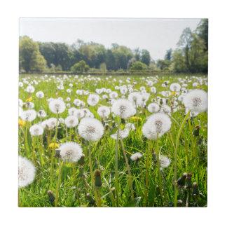 Overblown dandelions in green dutch meadow tile