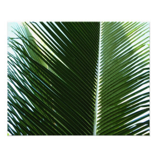 Overlapping Palm Fronds Photo Print