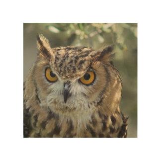 owl-54.jpg wood prints