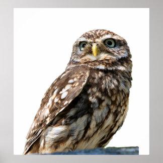 Owl bird beautiful photo portrait poster, print