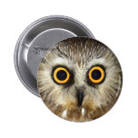 owl buttons