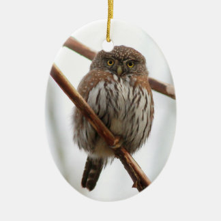 Owl Christmas Ornament - Northern Pygmy-Owl