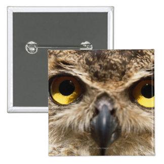 Owl Close-Up 15 Cm Square Badge