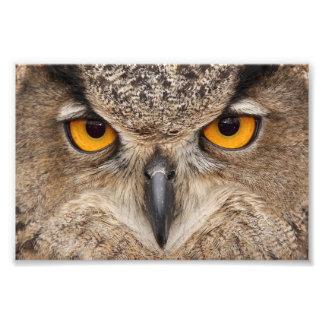 Owl eyes art photo