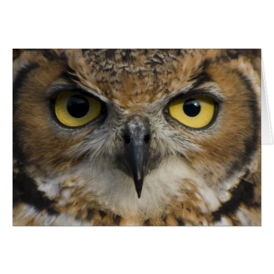 Owl Eyes Card