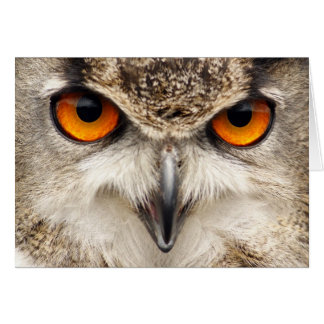 Owl Eyes, Eyes of the Eagle Owl Photograph Greeting Card
