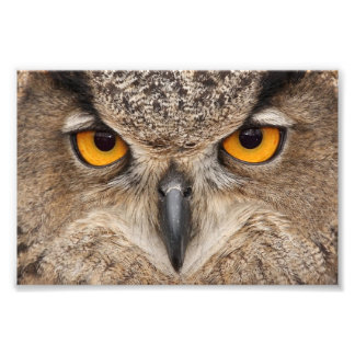 Owl eyes photo print