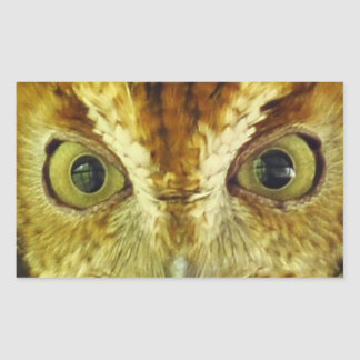 Owl Eyes Screech Owl Sticker
