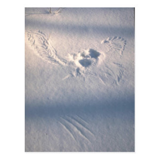 Owl feather imprint in the snow postcard