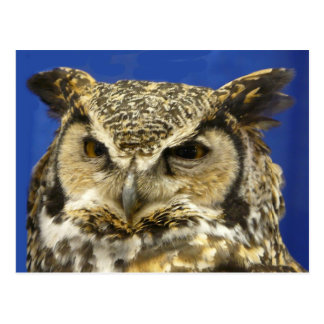 OWL - Great Horned Owl Face Photo Postcard