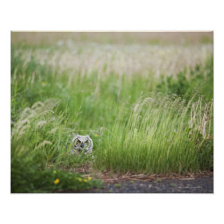 Owl In The Grass Poster