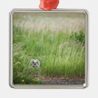 Owl In The Grass Silver-Colored Square Decoration