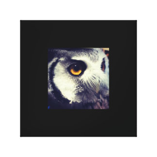 Owl Photo Canvas