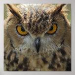 Owl Photo Poster Print