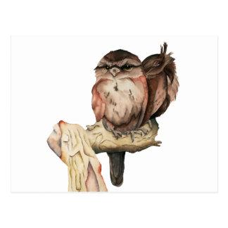 Owl Siblings Watercolor Portrait Postcard