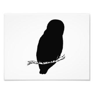 Owl Silhouette Photo Art