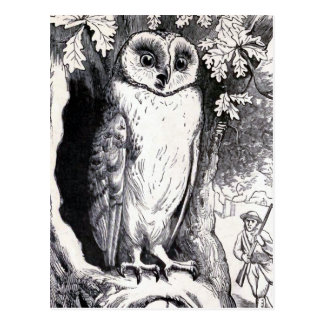 """Owl"" Vintage Illustration Postcard"