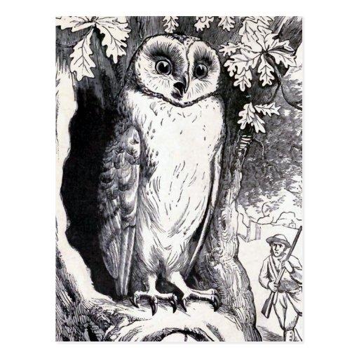 """""""Owl"""" Vintage Illustration Postcard"""