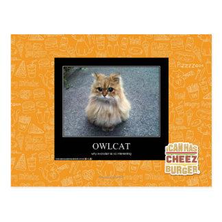 Owlcat Postcard