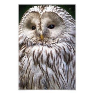 OWLS ART PHOTO