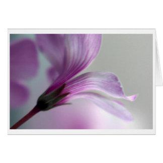 Oxalis Card