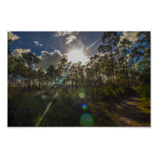 Oxbow Eco-Center trees and trail, Fort Pierce, FL Poster