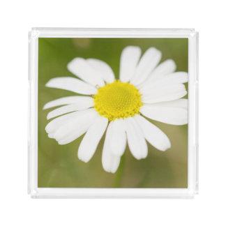 Oxeye Daisy Acrylic Tray