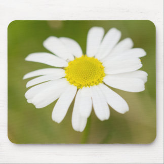 Oxeye Daisy Mouse Pad