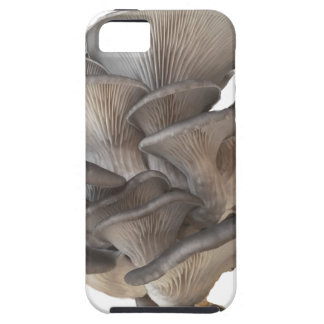 Oyster Mushroom iPhone 5 Cases
