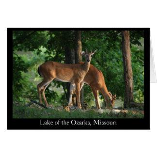 Ozark Deer (Title) Card
