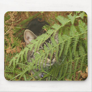 P1010017 nala the cat mouse pad