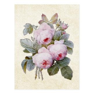 P.J. Redoute Bourbon Rose Floral Postcard