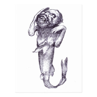 P. T. Barnums Fiji Mermaid Postcard