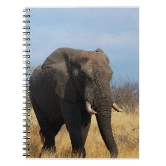 Pachyderm Notebook