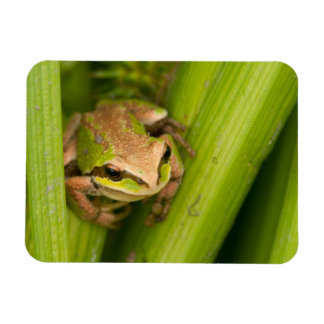 Pacific Chorus Frog Flexible Magnets