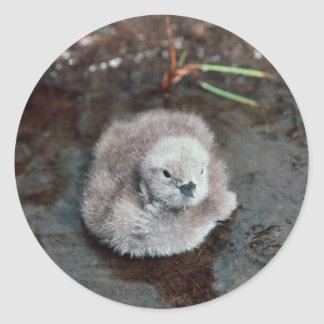 Pacific Loon Chick Classic Round Sticker