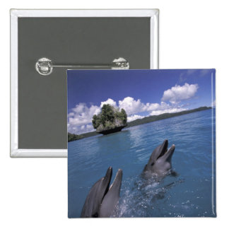 Pacific, Micronesia, Palau, Bottlenose 15 Cm Square Badge