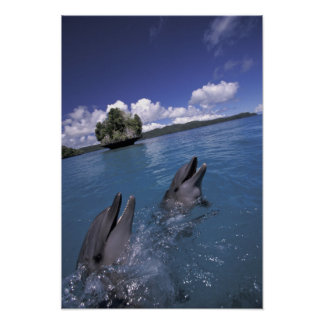Pacific, Micronesia, Palau, Bottlenose Poster