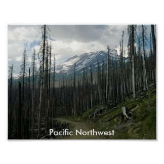 Pacific Northwest Back Road Beauty Poster