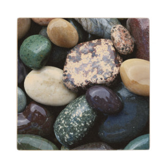 Pacific Northwest USA, Colorful river rocks Maple Wood Coaster