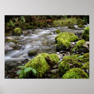 Pacific Northwest Wilderness Poster